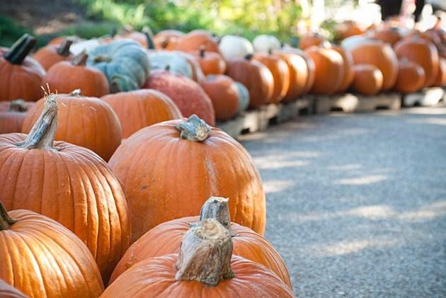 University United Methodist Church Pumpkin patch Wichita Falls
