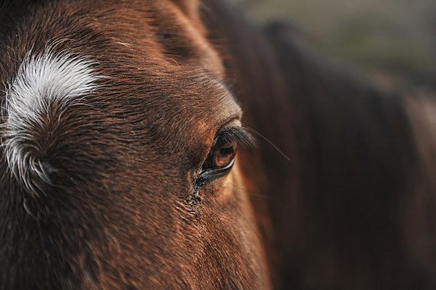 Portrait of a horse head outdoors in field